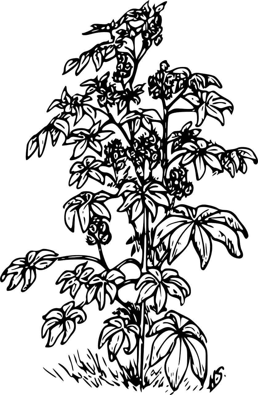 Forged Parts Black And White : Dessin stylisé plante ricin huile de